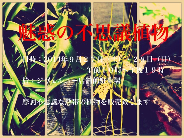 IMG_0715_Fotor_Collage_Fotor